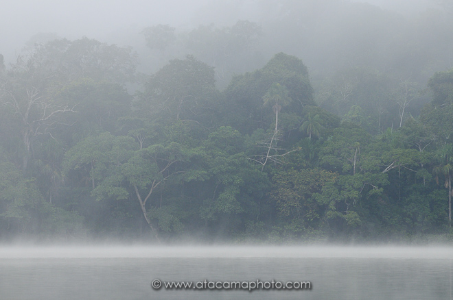 Chalalan lake and rainforest in morning mist, Madidi National Park