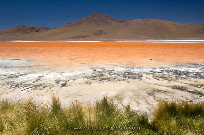 Laguna Colorada with green grass at the shore and desert mountains in the background, Bolivia