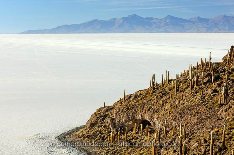 Isla del Pescado is covered with a forest of Echinopsis atacamensis cactus, Salar de Uyuni