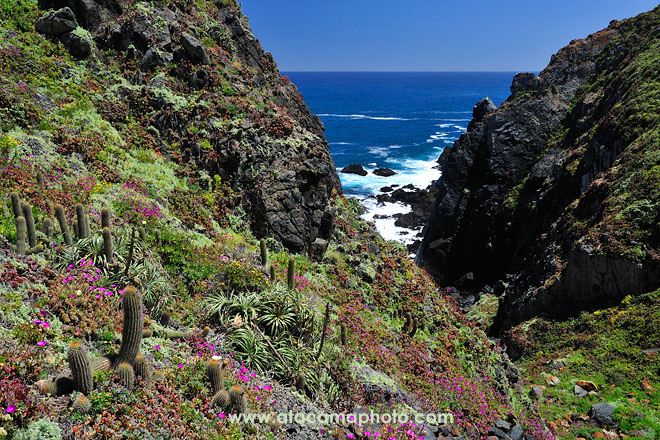 Flora with cactus, flowers and bromeliads at the wild coast of Chile's central zone