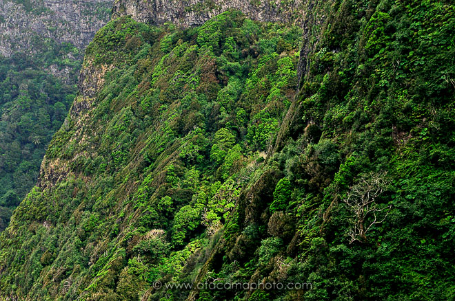 Steep inaccessible mountain cliffs with dense and largely endemic vegetation, Robinson Crusoe island