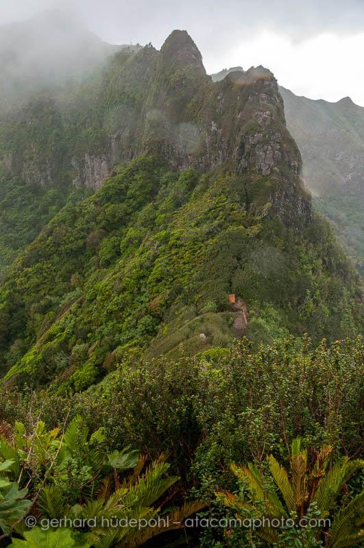 Steep mountain landscape and plants at Cerro El Yunque, Robinson Crusoe Island
