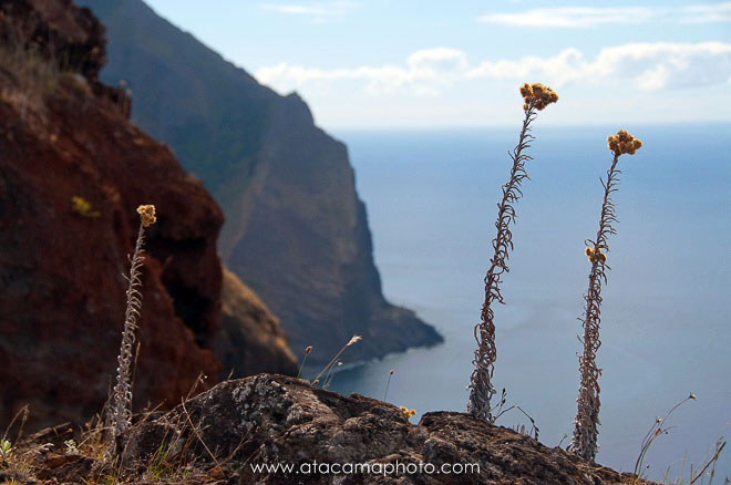 View from Salsipuedes trail down the vertical coastal cliffs of Robinson Crusoe Island