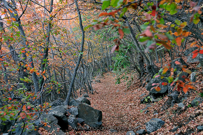 Autumn forest at La Campana National Park, Chile