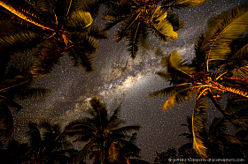 The Milky Way above palm trees on an island in the South Pacific, Tonga
