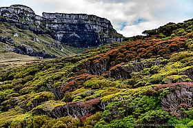 Dramatic rock cliffs at Auckland Island with sub-antarctic forests of blooming rata trees