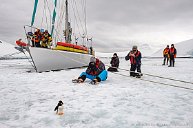 """Penguin photo shooting in Antarctica from sailing yacht """"Spirit of Sydney"""""""