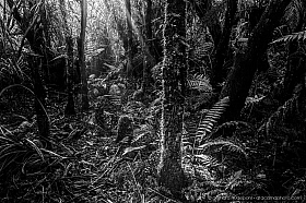 Dense forest with ferns, moss and sun rays at Ship Creek swamp forest, Haast, New Zealand