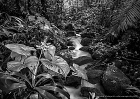 Small creek and flowers in the rain forest of Braulio Carrillo National Park, Costa Rica