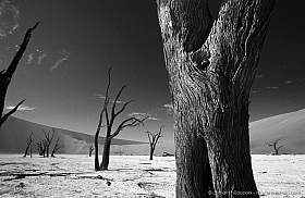 Dead trees at Deadvlei, Namibia