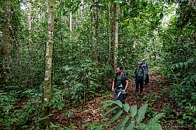 Jungle hike with Chien and Frank at Deramakot Forest Reserve