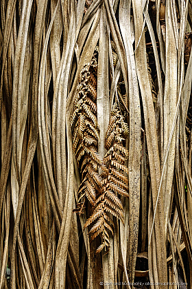 Dry palm tree leaves and fern leaves, forest of New Zealand