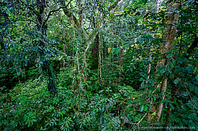 Canopy tree top walk above the rain forest, Mulu National Park, Borneo