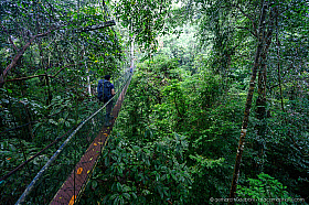 Mulu canopy walk gives a unique view of the rain forest at tree top level