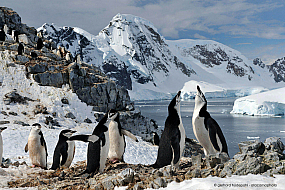 Chinstrap penguin (Pygoscelis antarcticus) rookery in the mountains above Orne Harbour, Antarctic Peninsula