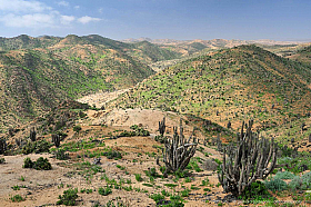 After a rare rain the Atacama desert gets a green cover of plants, Pan de Azucar National Park