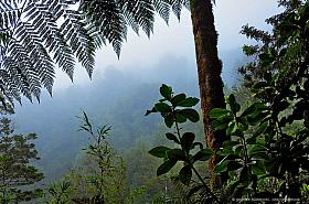 Fog in the dense Valdivian temperate Rainforest, Parque Oncol Chile