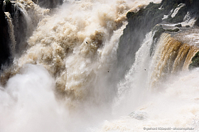 The force of water, Iguazu falls. Great dusky swifts (Cypseloides senex) are nesting behind the falls.
