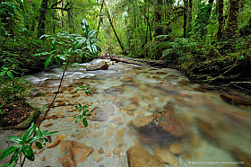 Creek with rocks in native forest of Valle Cochamo, Patagonia, Chile
