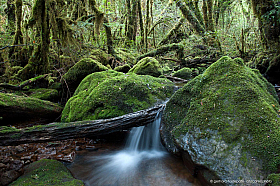 Amazing forest of mosses in temperate rainforest of Cochamo Valley, Patagonia Chile