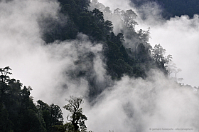 Dramatic clouds over the temperate rain forest of Cochamo Valley after rain