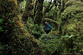 Exploring the temperate rainforest of Isla Madre de Dios. High rainfall cause extremely thick moss growth.