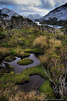 Marshes and wetlands, typical vegetation on Isla Madre de Dios, Patagonia Chile