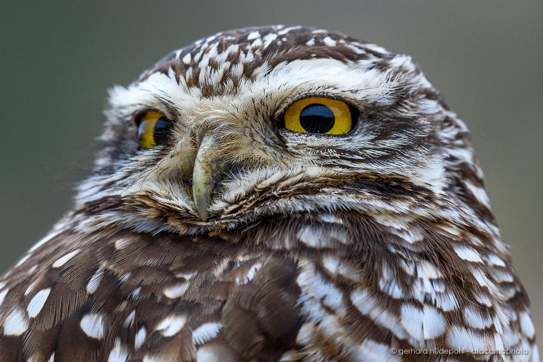 Atacama Desert Animals - photos birds, lizards, insects and